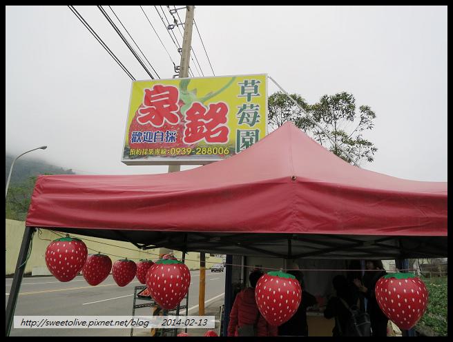 20140213 大湖採草莓 南投賞花燈-4