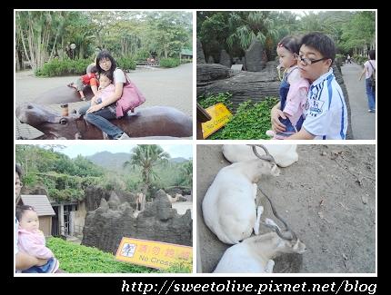 Taipei Zoo 10.jpg
