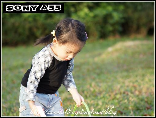sony a55 and da-an park-5.jpg