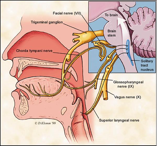 周邊神經系統.png