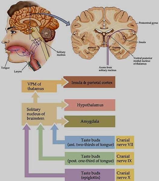 中樞神經系統.png