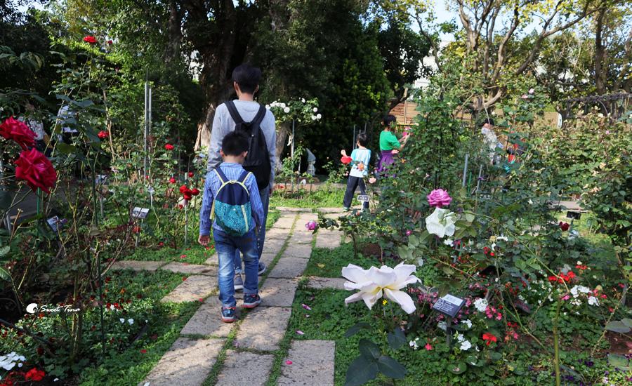 臺北玫瑰園