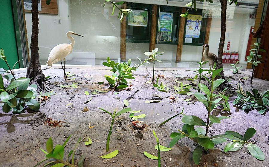 紅樹林自然生態展示館
