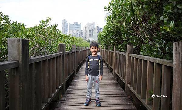紅樹林自然生態