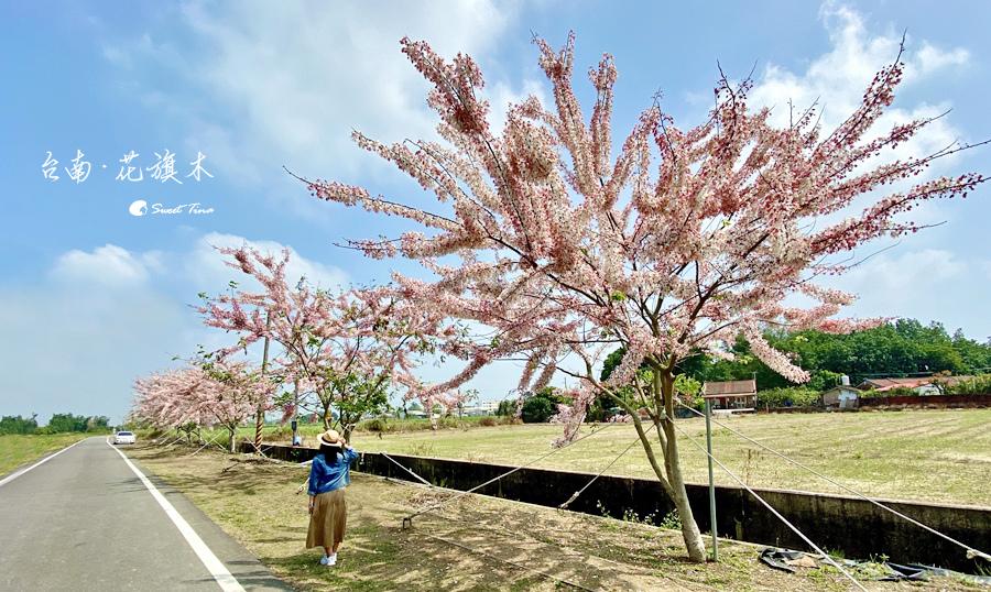 台南花旗木