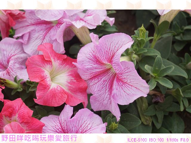 DSC00294P16.jpg