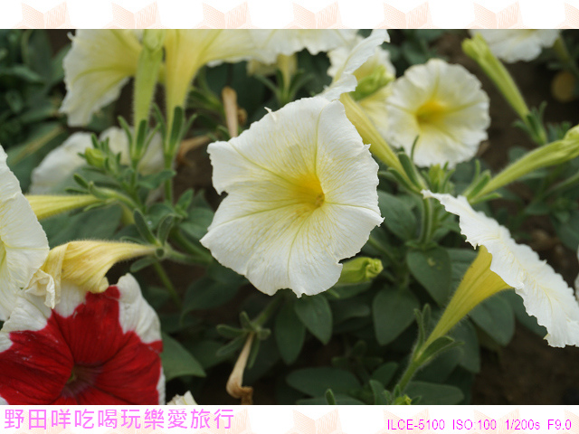 DSC00295P18.jpg