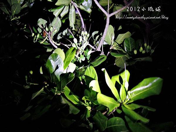081-DSCN3060-1024.jpg