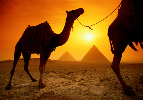 egypt_camel-sunset.jpg