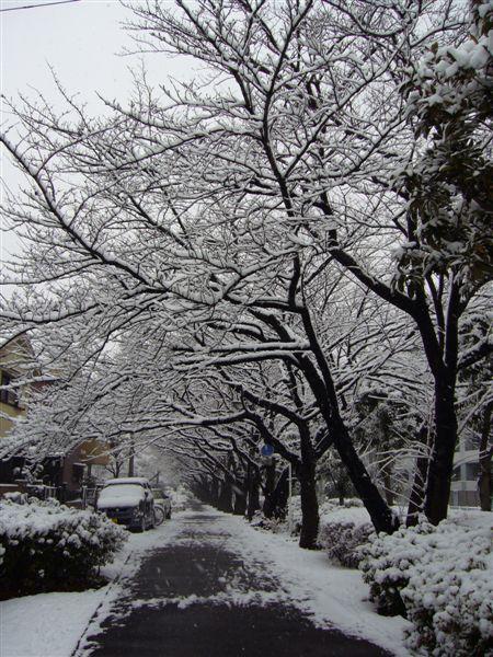 snow 016.jpg