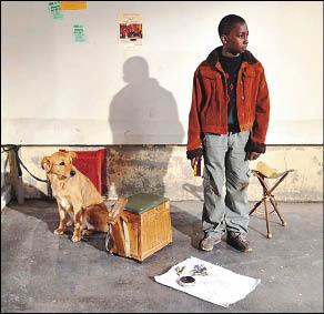 《溫心港灣》的萊卡犬來自演藝世家,牠的媽媽曾以郭利斯馬基《沒有過去的男人》贏得金棕櫚狗狗獎。 (坎城影展提供).jpg