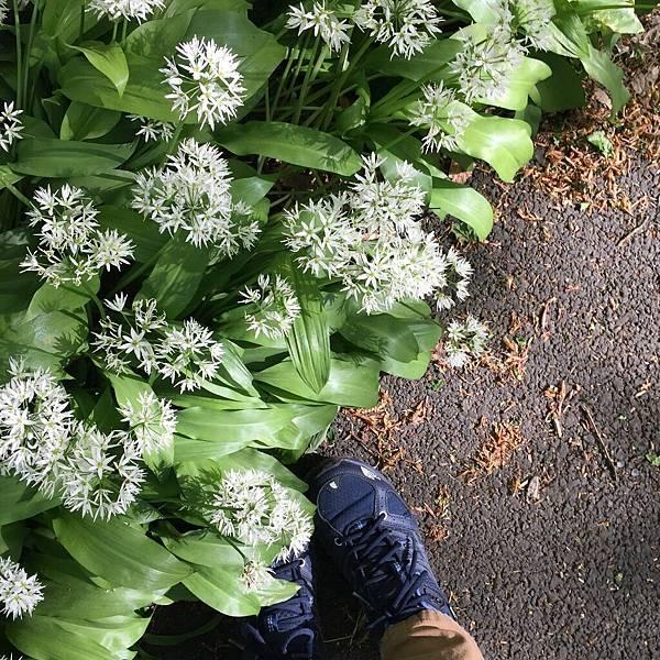 5月來湖區有好多花朵