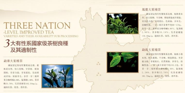 認識普洱茶科學茶