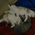 喜歡睡在一起
