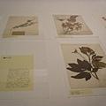 博物館裡擺設有關植物的部分