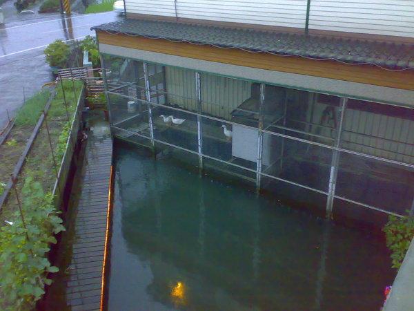 從二樓往下看去,民宿主人的小魚池和鴨子(不知道是養來觀賞還是養來自用 = = )