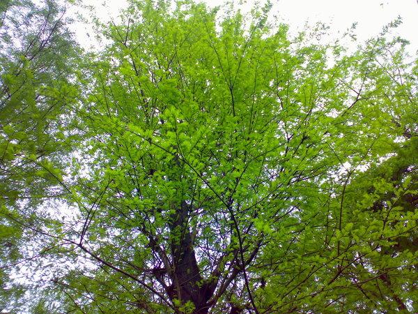 嫩芽的顏色只能用翠來形容