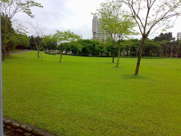如果不是草地帶著雨水和露水,我ㄧ定就上去滾了