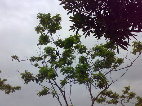 數得出這棵樹上躲著幾隻鳥嗎?