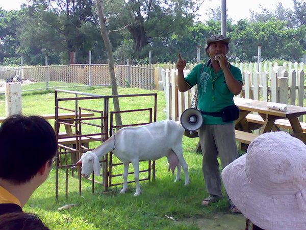 業主阿財講解台灣的羊乳產業、解說羊乳營養成份及如何擠羊奶