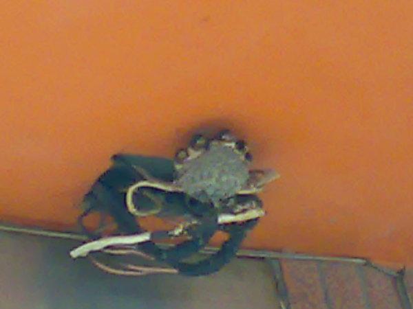 旁邊店家屋簷下的一窩小燕子