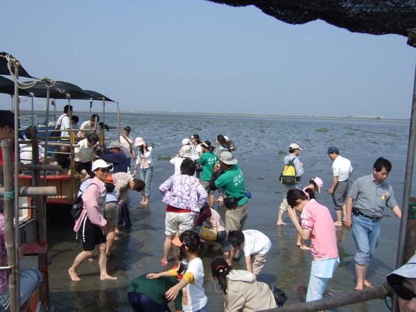 一大群人光腳踩在潮間帶上的熱鬧景象
