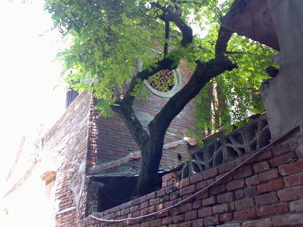 意樓古窗及那棵楊桃樹