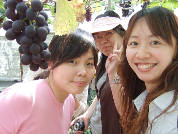 葡萄串比我的臉還大,不是因為我臉小,而是葡萄真的粉大串!!