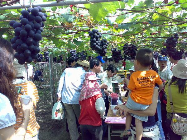 葡萄農家提供自製的葡萄露,喝太多可是會醉的