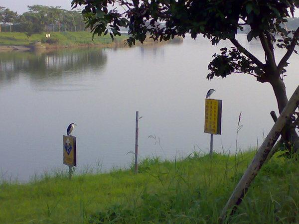 沿途景觀之兩隻鳥(娜娜請跳過此張)