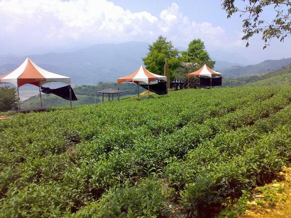 玉蘭茶園一景