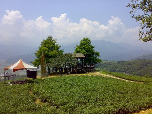 玉蘭茶園二景