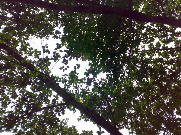 頭上的榕樹把陽光都篩掉了,只剩涼風