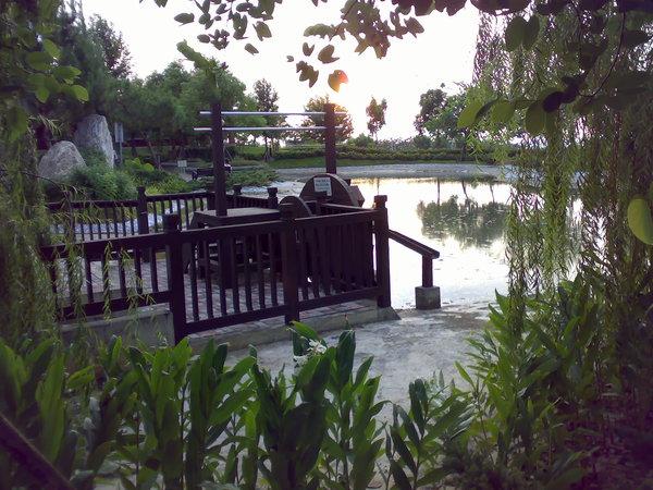 水塘旁邊的步道種滿了野薑花