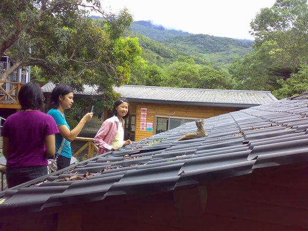 少女發現屋頂上的小貓