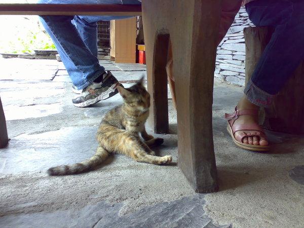 小貓玩著玩著就來到JJ腳邊