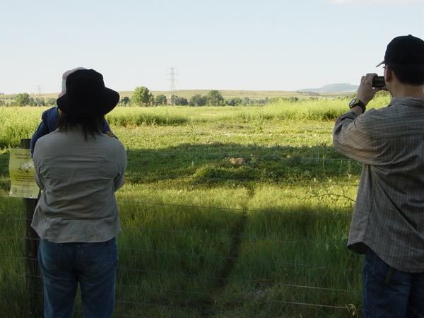 探出頭的土撥鼠和我們這群觀光客