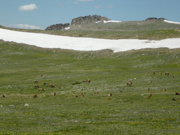 鹿就在馬路邊吃草