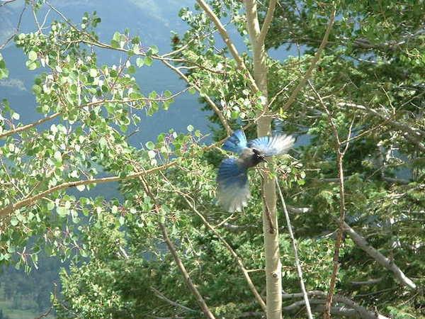 下山的途中看到一隻藍色的鳥