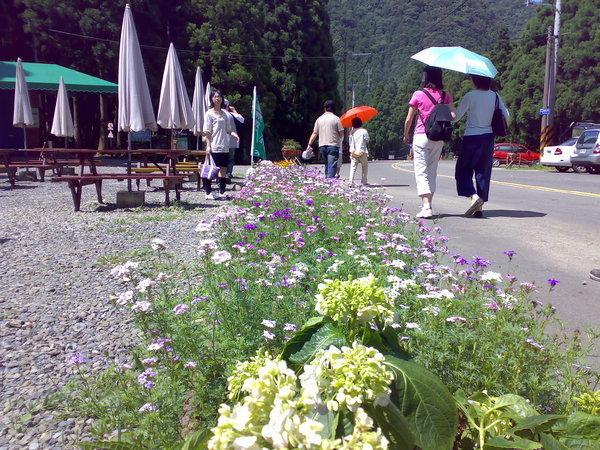 準備前往入山口,路邊盛開的小花