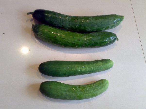 以色列小黃瓜(下)和老媽牌小黃瓜(上)
