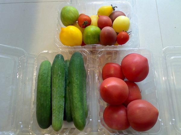 帶回來的戰利品(上為各品種番茄、左以色列小黃瓜、右日本桃太郎番茄)