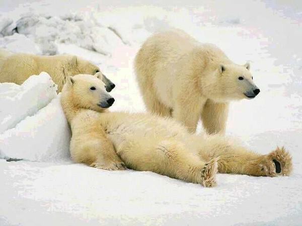 懶熊.jpg