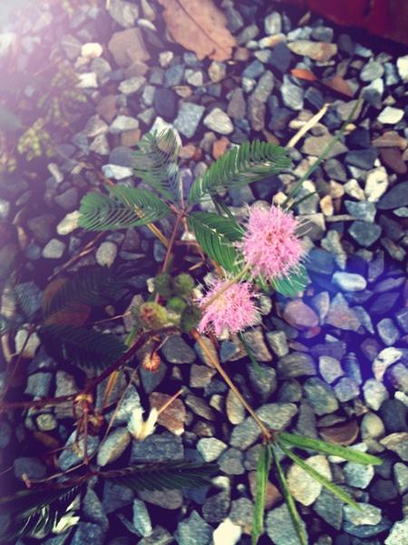 reifan garden