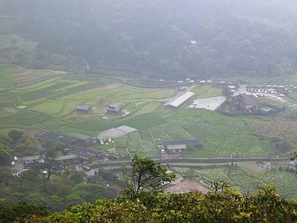 竹子湖-海芋田