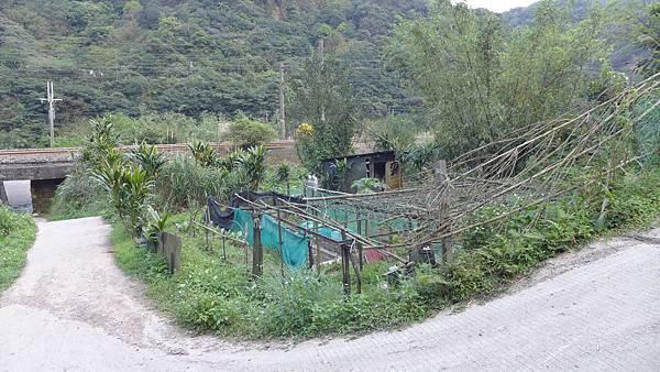 照片 017-獅嘴尖登山步道邊菜園(輕海紋白蝶)