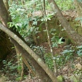 lee-11-木炭窑