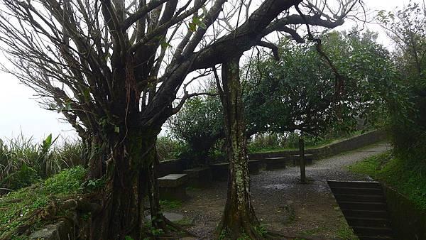 照片 090老榕樹盤結糾纏.jpg
