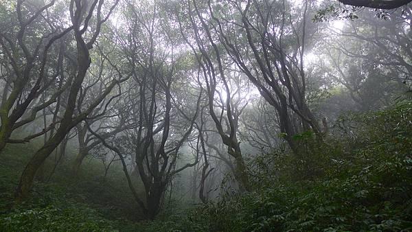 照片 026-楠木林