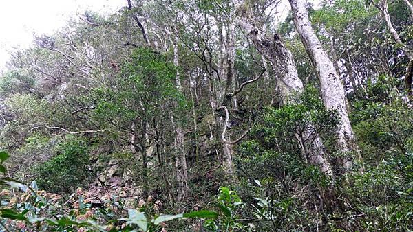 照片 102-登頂前的聳立地形.jpg